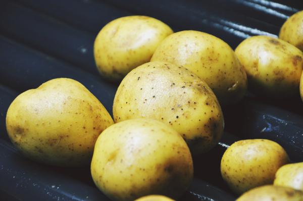 Ziemniaki gotowe do obierania w obierczkach do ziemniaków